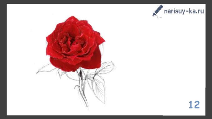 kak-narisovat-rozu-poetapno-12