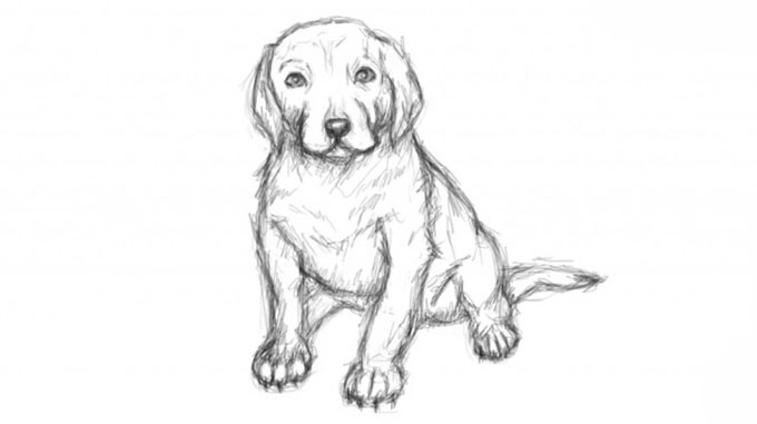 Как нарисовать собаку поэтапно карандашом