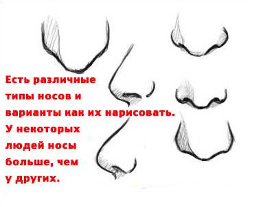 Формы человеческого носа