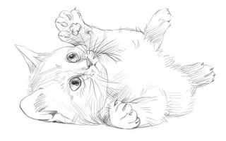 Как нарисовать котенка, рисуем карандашом поэтапно