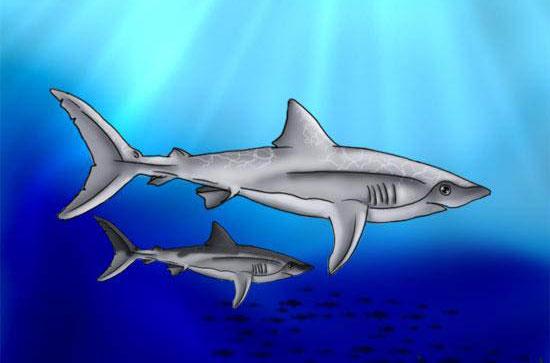 Рисуем акулу поэтапно