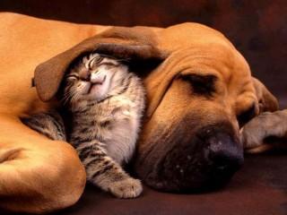 Рисуем дружбу кошки и собаки