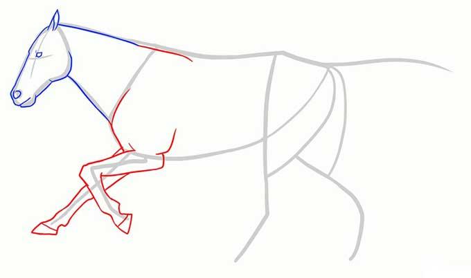 Рисуем передние ноги бегущего коня