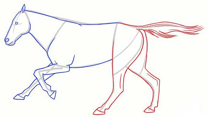 Рисуем задние ноги и хвост