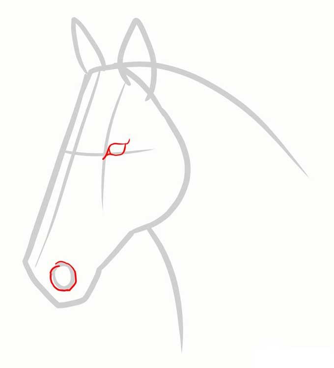 Рисуем глаз и ноздрю лошади