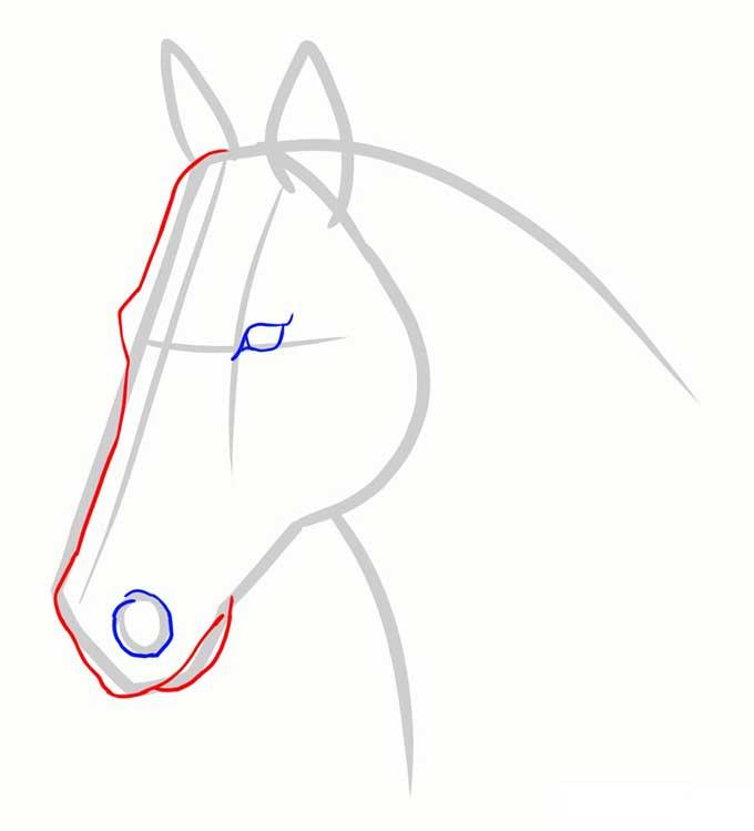 Рисуем линию лба, морды и рта лошади
