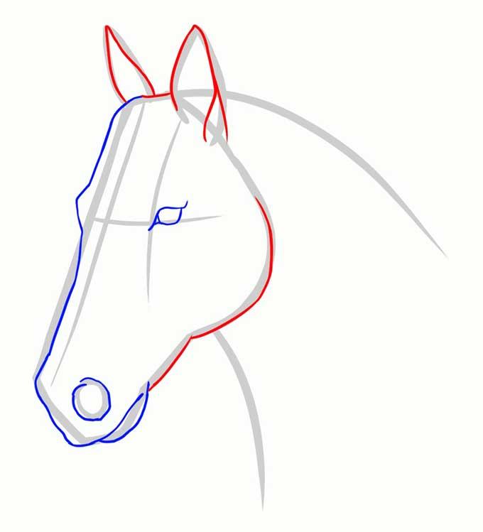 Рисуем уши и скулы нашей лошади