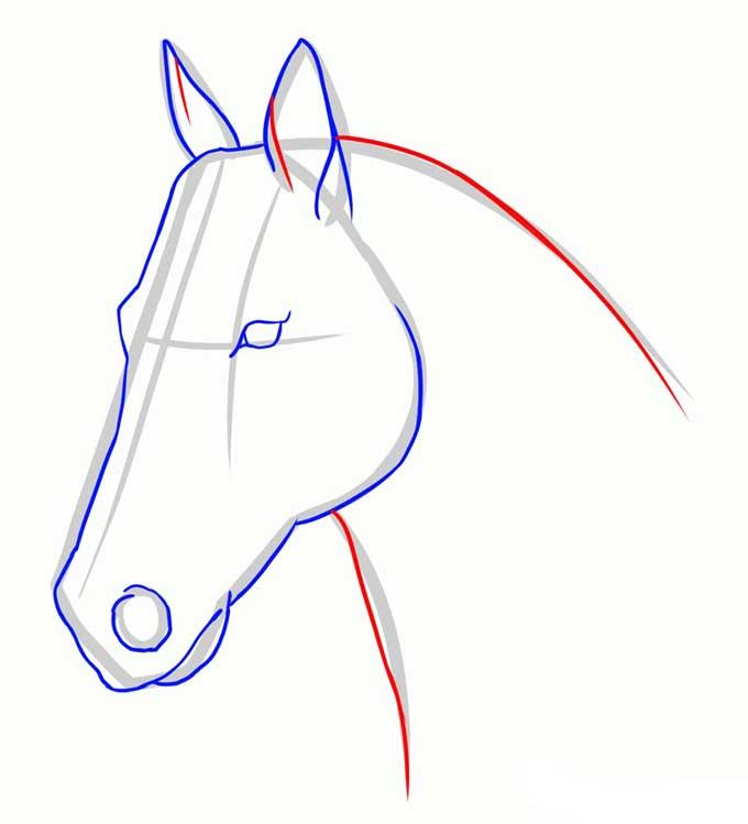 Дорисовываем уши и рисуем шею лошади