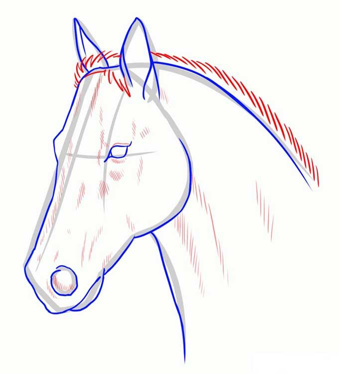 Рисуем гриву лошади, рисуем тени