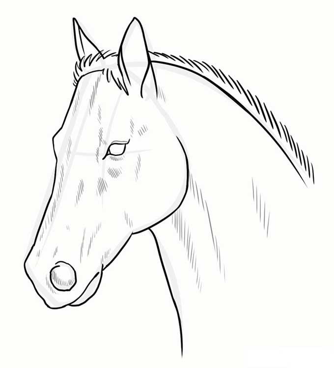 Готовое изображение головы лошади