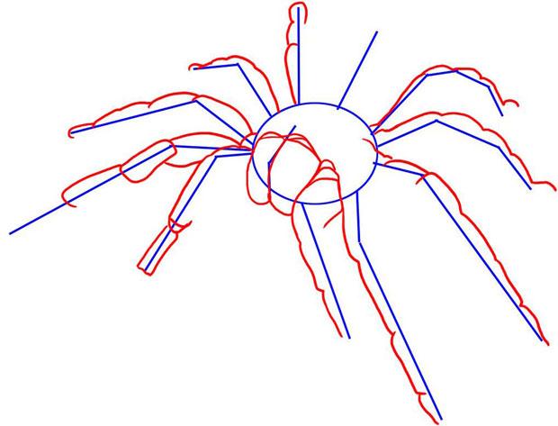 Рисуем ноги и хелицеры паука