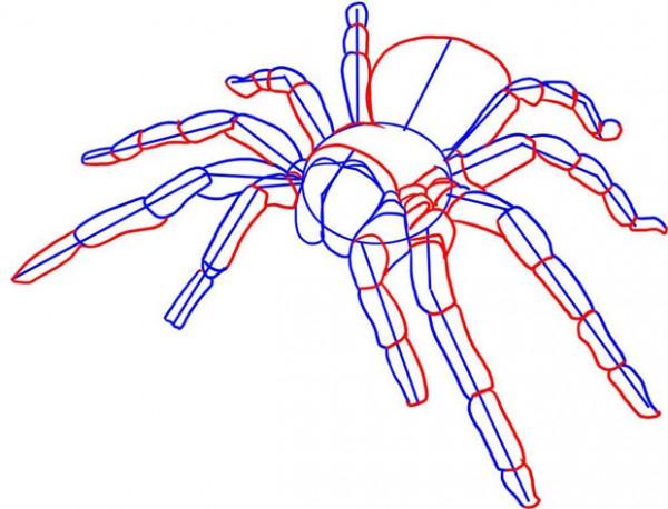 Как на учится рисовать пауков