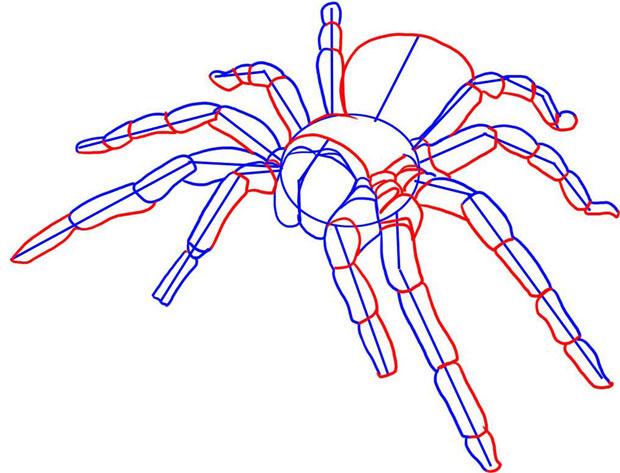 Рисуем ноги и живот паука