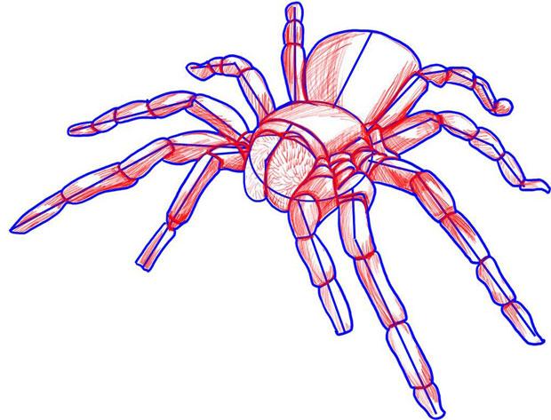 Рисуем тени паука