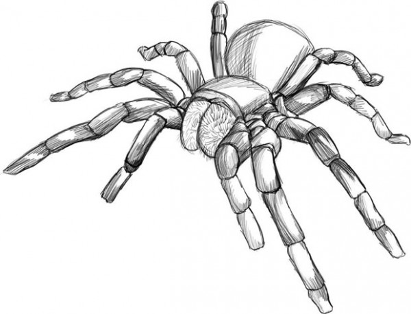 Рисуем карандашом пауков