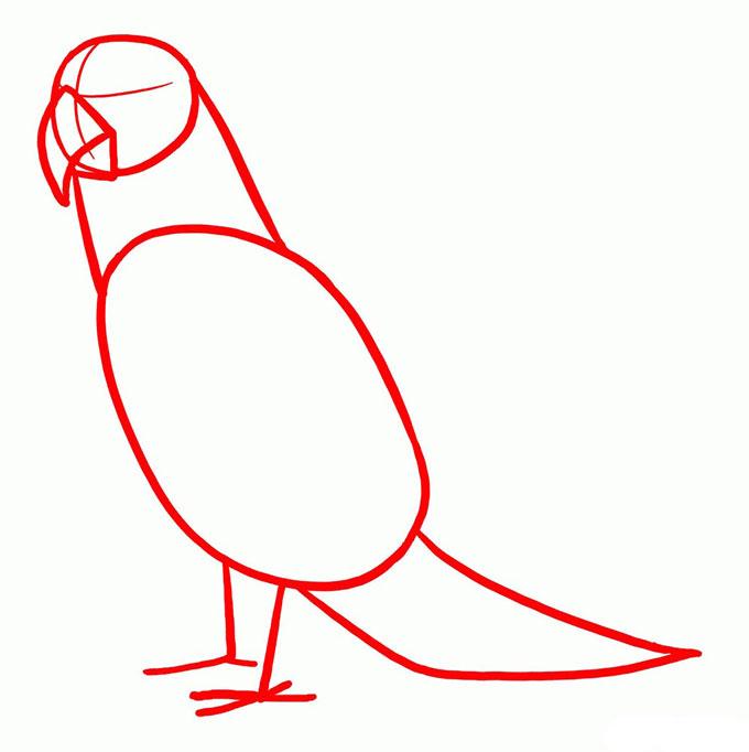 Рисуем контуры попугая Ара