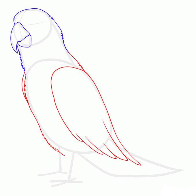Рисуем тело и крылья