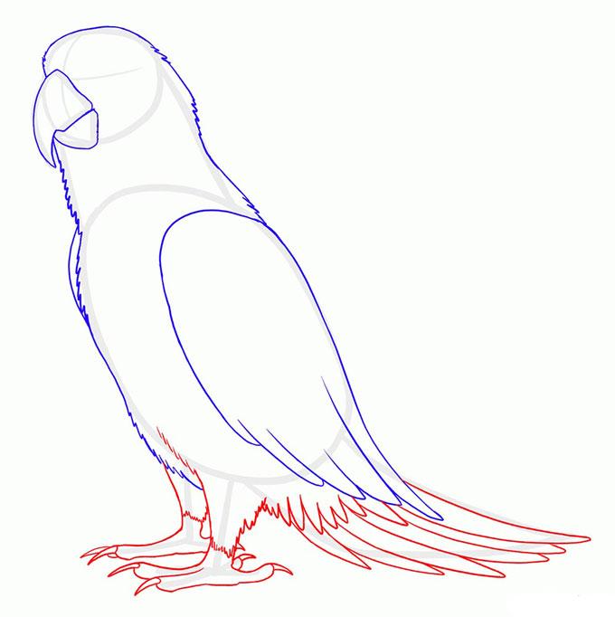Рисуем лапы и хвост попугая Ара
