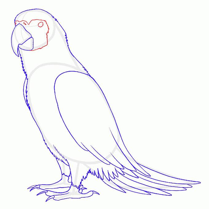 Рисуем глаза попугая Ара