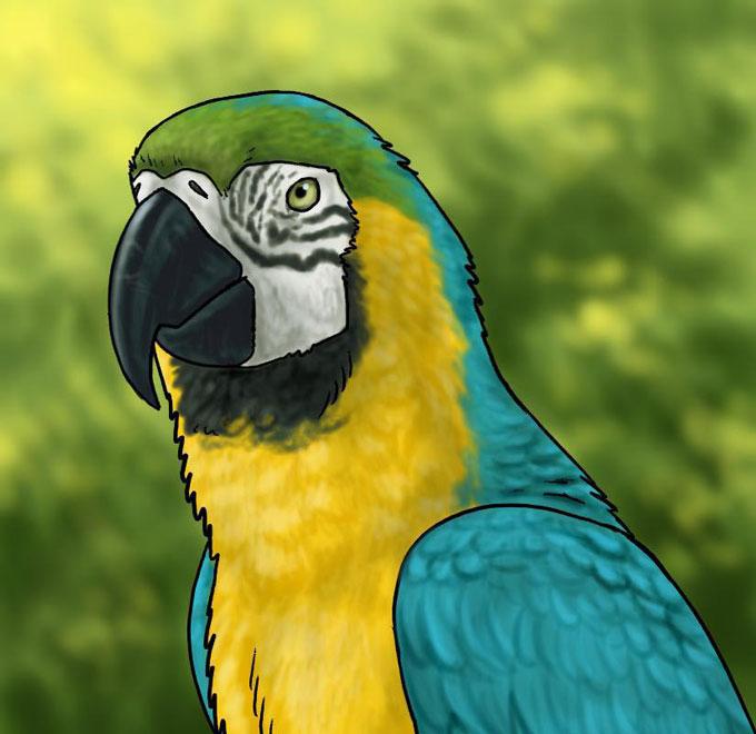 Учимся как нарисовать попугая