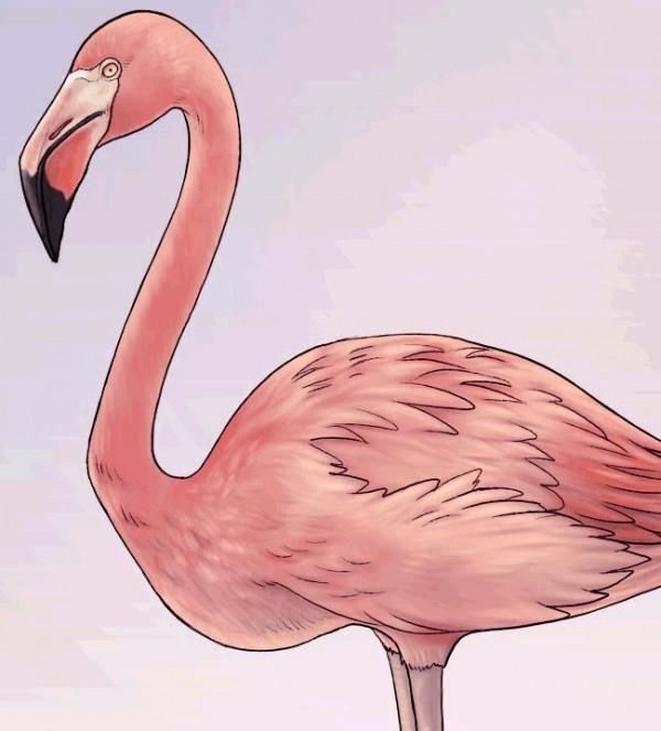 Как дети рисуют фламинго
