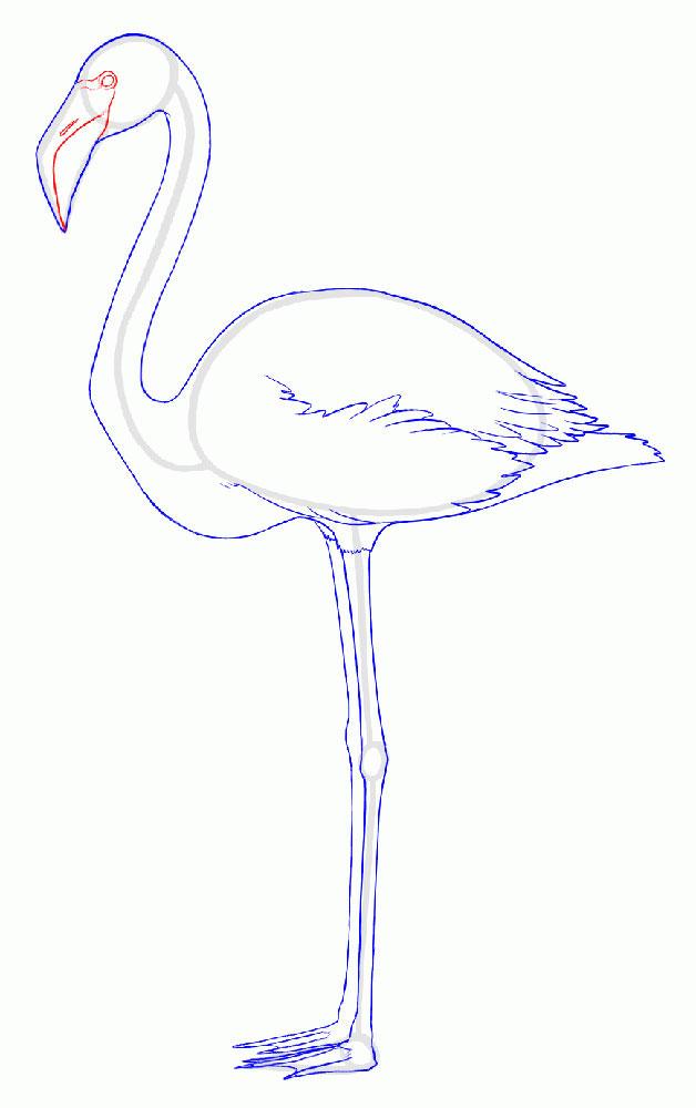 Рисуем глаза и линию клюва Фламинго