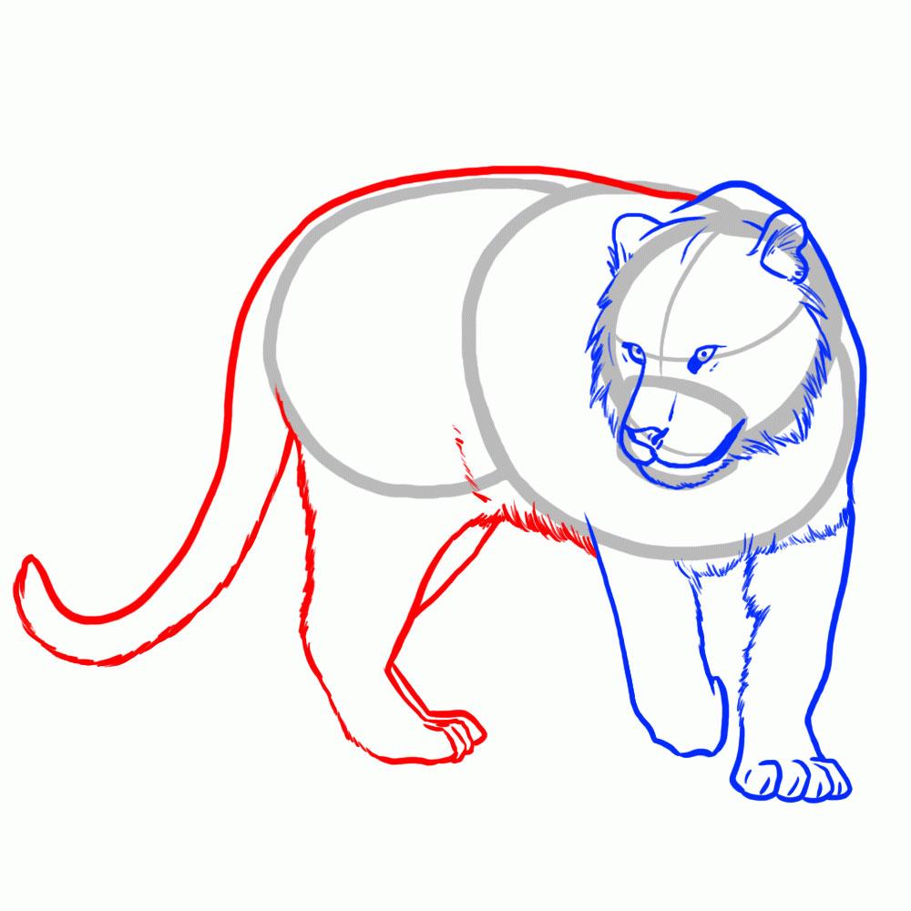 Рисуем контур тела тигра, задних лап и хвоста