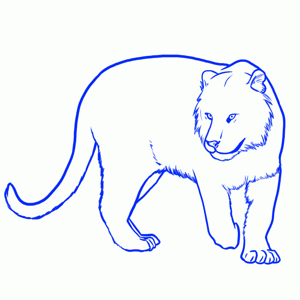 kak-narisovat-tigra-17
