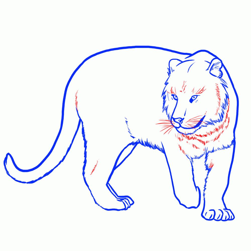 kak-narisovat-tigra-18