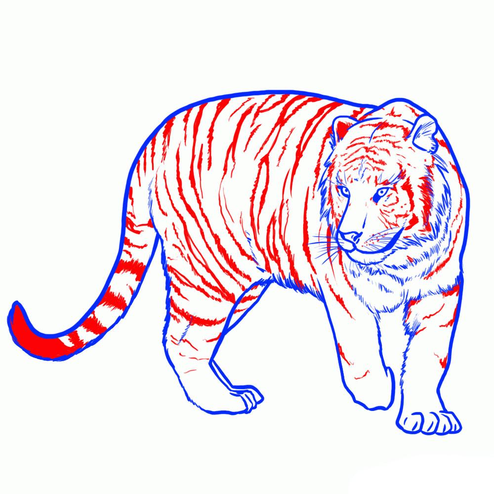 Рисуем полосы тигра