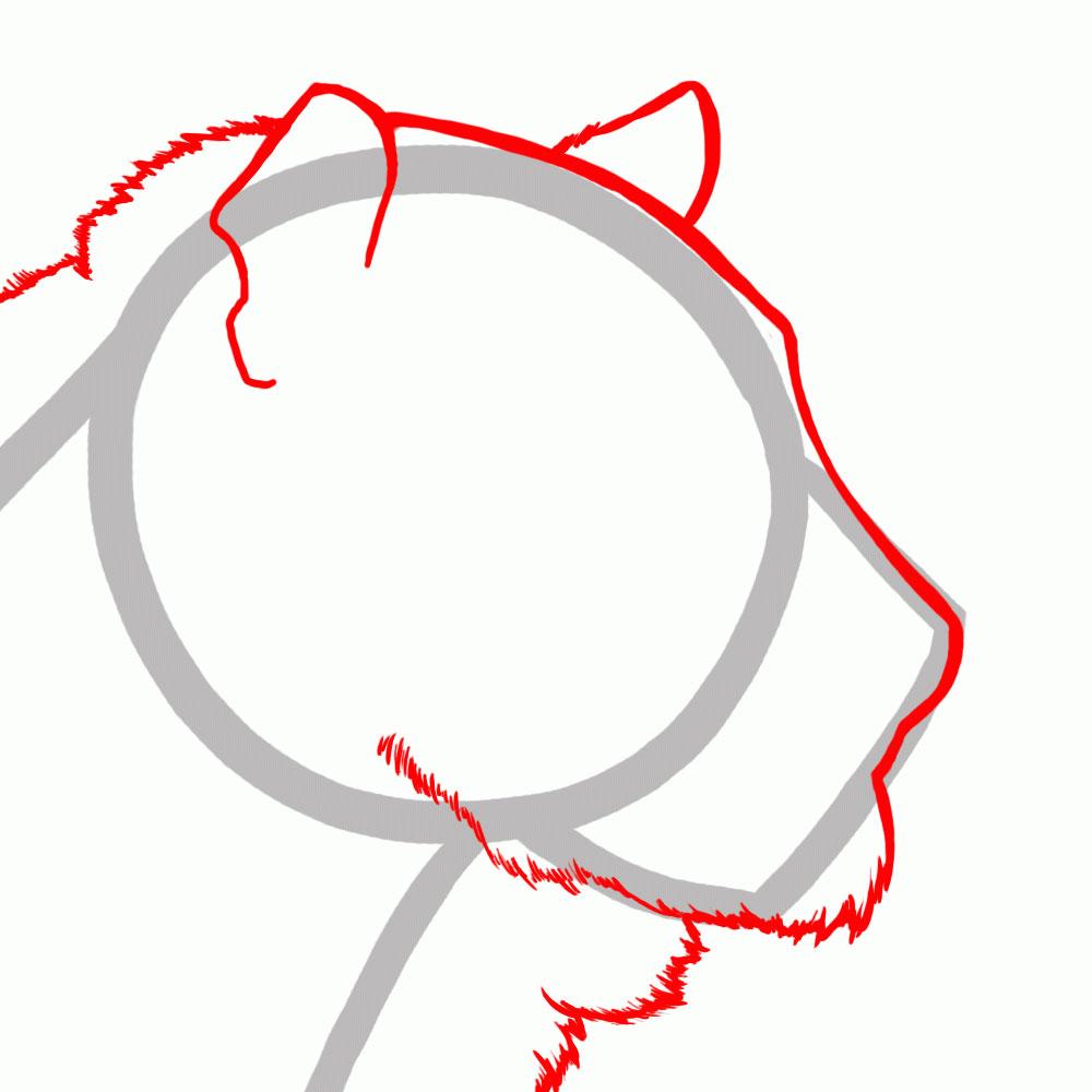 Рисуем контуры головы тигра
