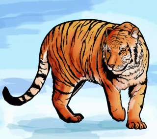 Учимся как нарисовать тигра