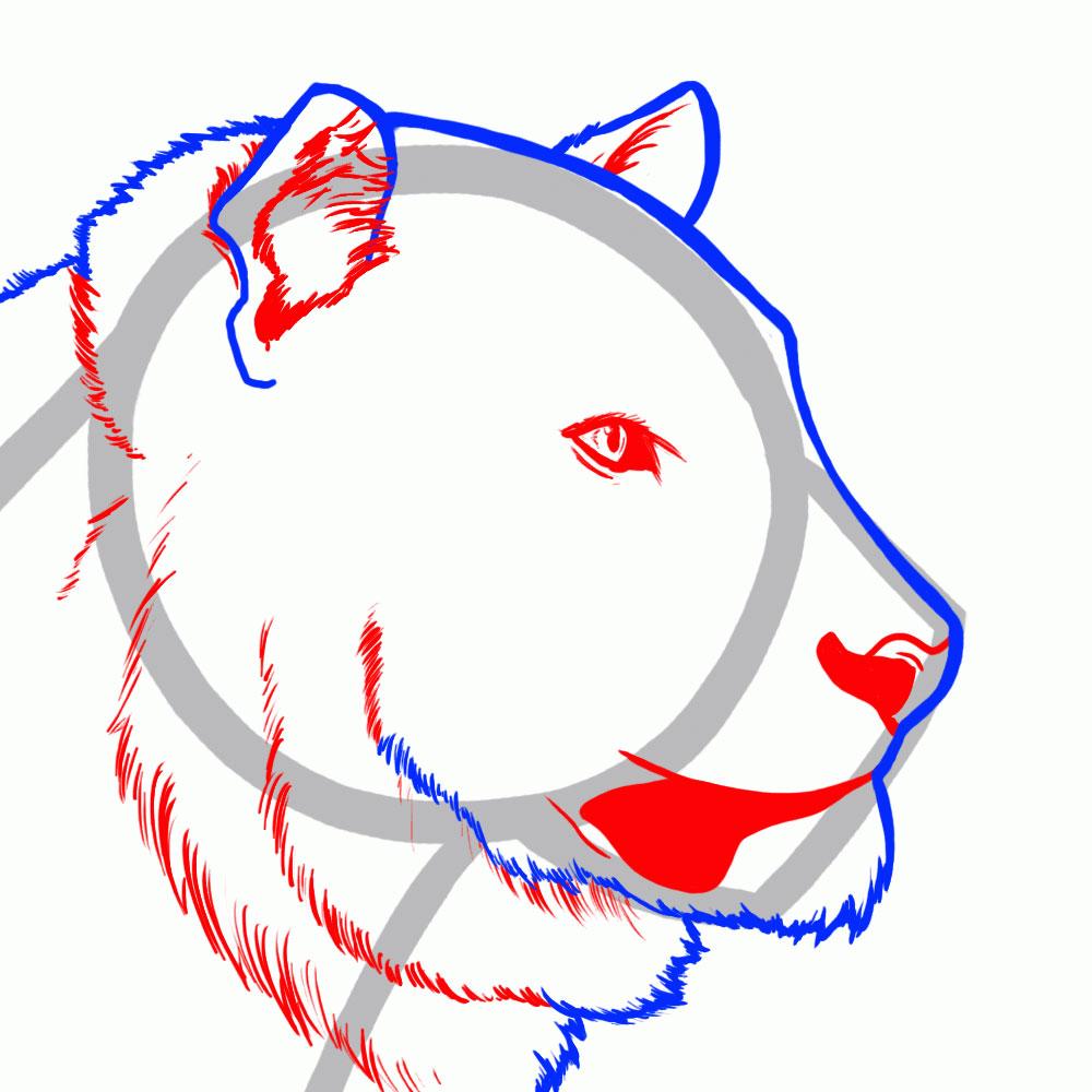 kak-narisovat-tigra-4