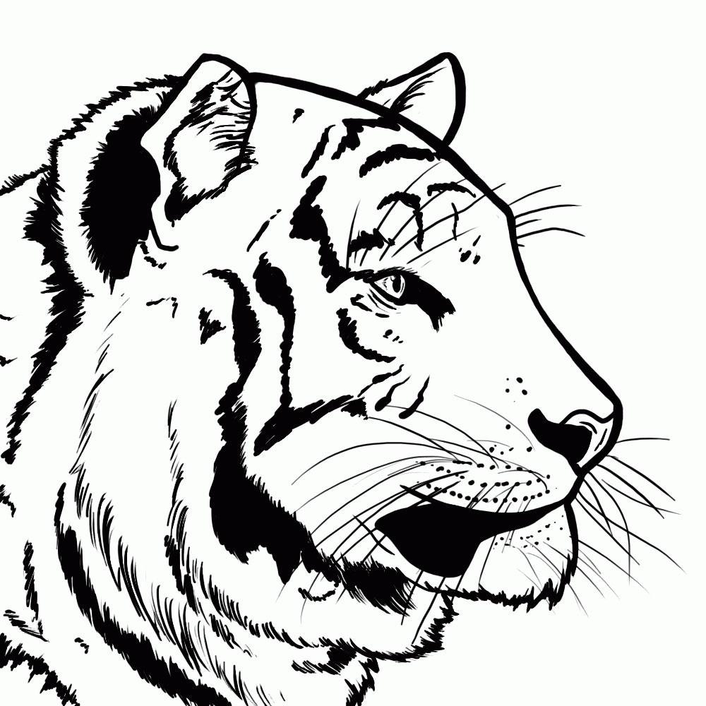 kak-narisovat-tigra-5