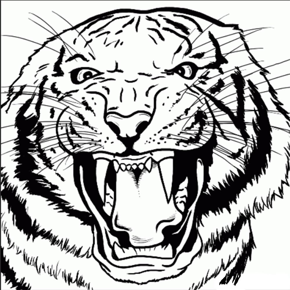 kak-narisovat-tigra-9