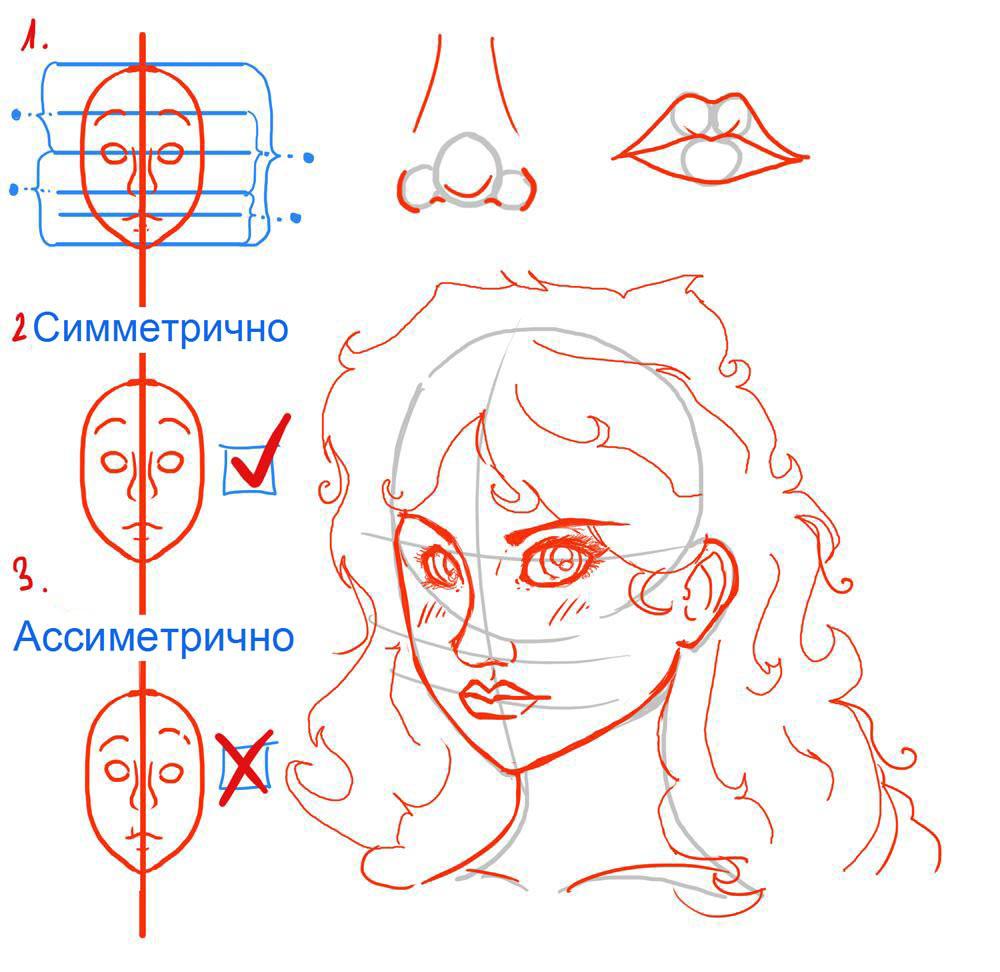 Рисуем симметрию лица девушки