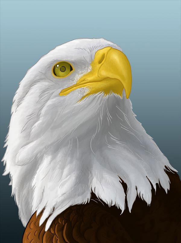 Учимся, как нарисовать орла