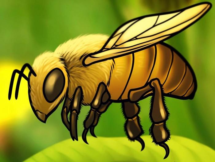Учимся как нарисовать пчелу поэтапно