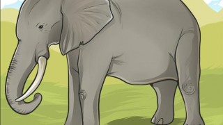 kak-narisovat-slona
