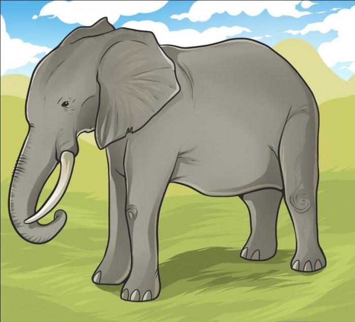 Учимся как нарисовать слона